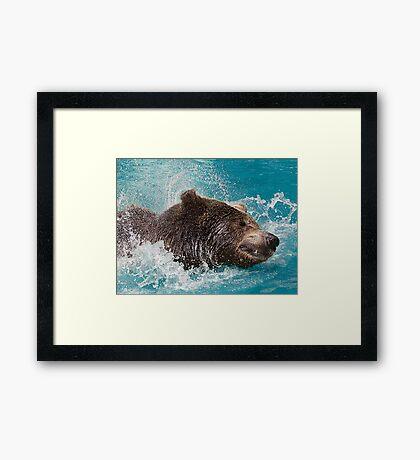 Bear's splashing in the Water Framed Print