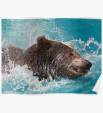 Bear's splashing in the Water Poster
