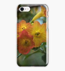 Small orange yellow flowers on shrub Leith Park Victoria 20151022 0469 iPhone Case/Skin