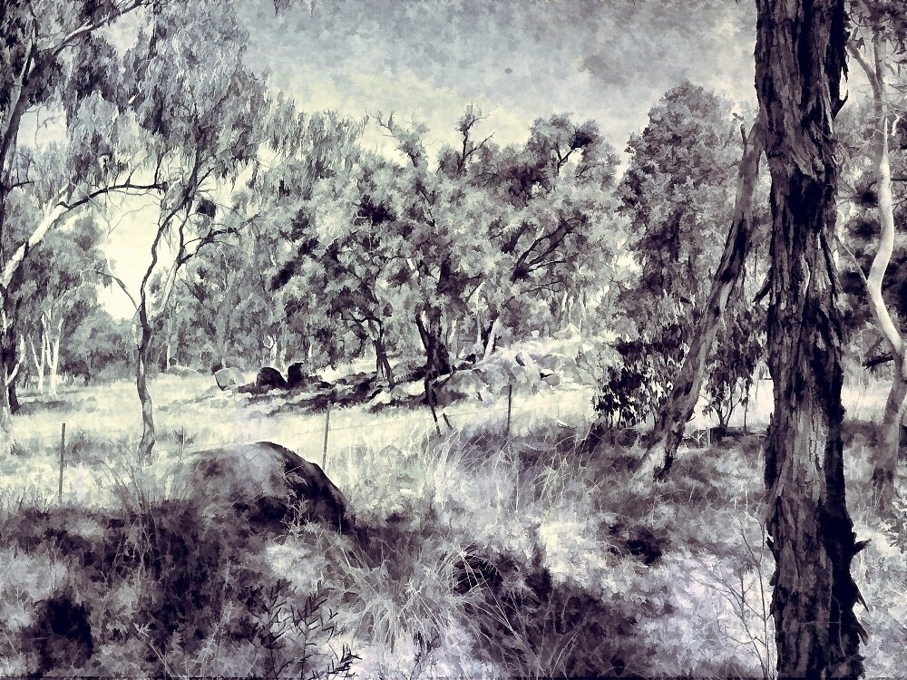 Near Leslie Dam Warwick QLD by Albert