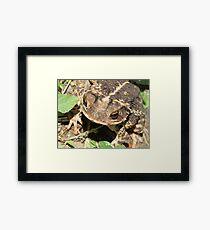 Toad Framed Print