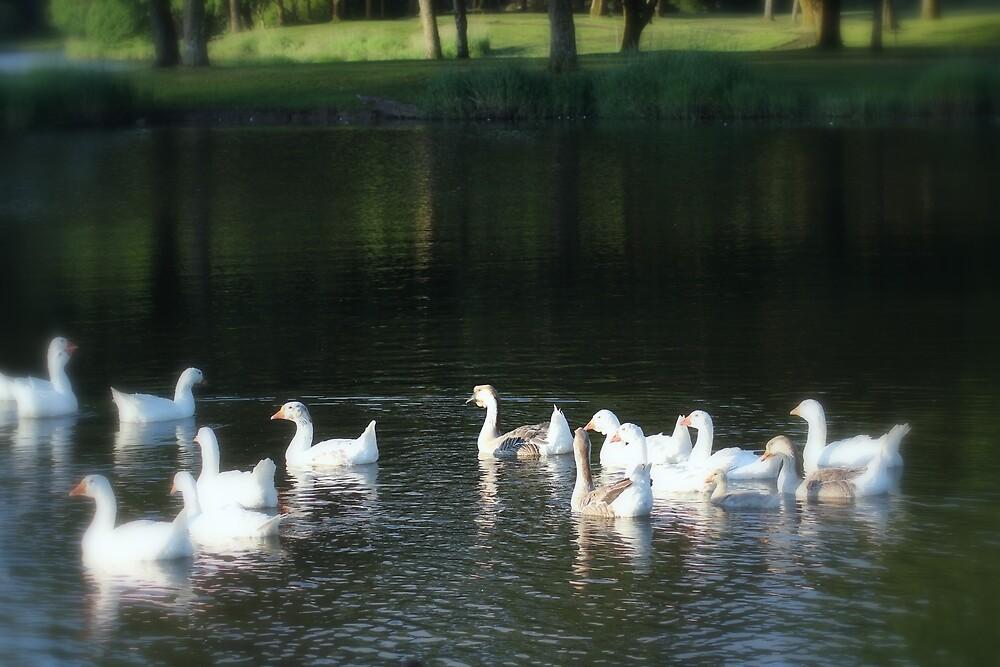 Geese in Trojan pond, near Goble, Oregon by Dawna Morton