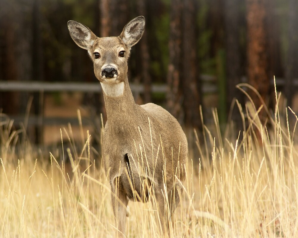 I hunt with a Nikon! by Bryan D. Spellman