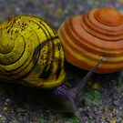 Bannana and Peach Snails by theartguy