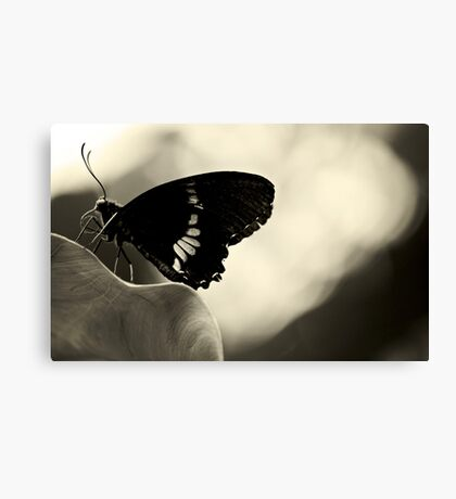 Nectar connoisseur Canvas Print