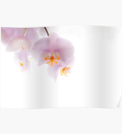 Orchid Soft Poster
