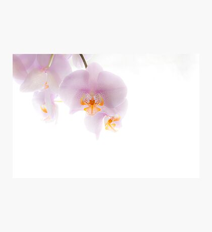 Orchid Soft Photographic Print