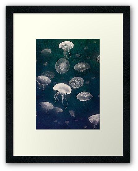 Jellyfish by Robert Jackson