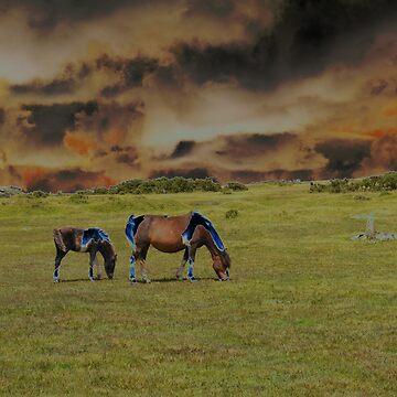 Moors10_Calander by TabithaB-W