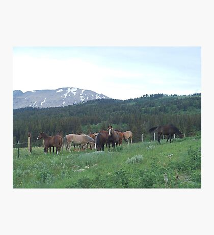 THE BLACKFOOT BAND AND THE SORREL STUD - Near Browning, MT Photographic Print