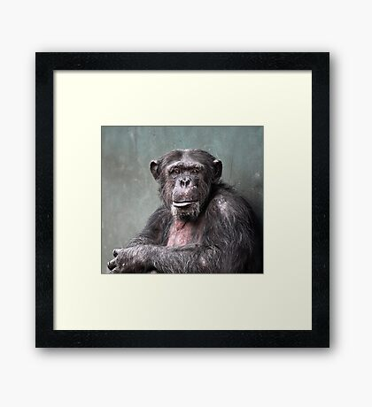 Life In A Concrete Jungle Framed Print