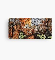 coloured by nature  Canvas Print