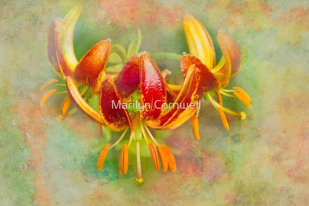 Liliputian Lilium by Marilyn Cornwell