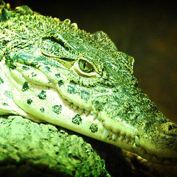 Crocodile by plopezjr