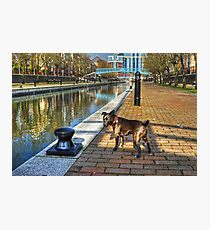 The HDR Terrier....Salford Quays Photographic Print