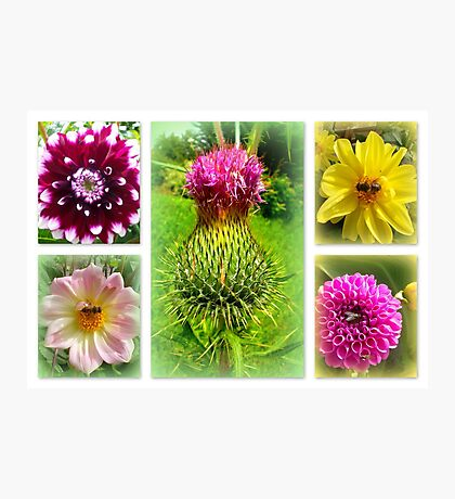 Blooming Marvellously! Photographic Print