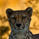 Cheetah by RocketDesigns