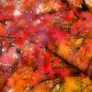 Autumn Leaves by gypsygirl