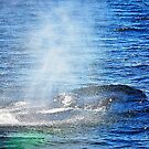 Humpback Whale taking a Breath by joevoz