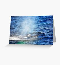 Humpback Whale taking a Breath Greeting Card
