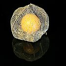Golden Gooseberry on Black by Michelle Cocking