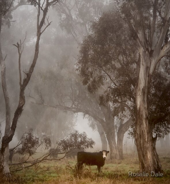 Mooooving moment ~ #2 by Rosalie Dale