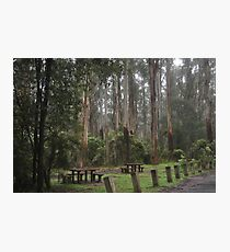Picnic in Sherbrooke Forest Photographic Print