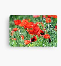 """""""Poppies Woldgate"""" Canvas Print"""