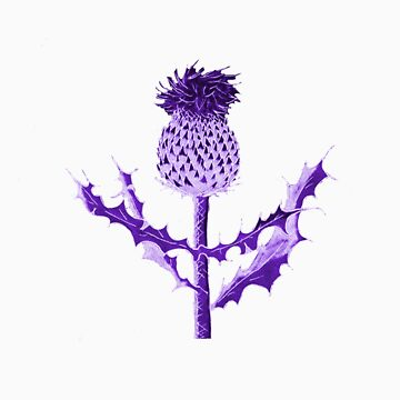 Purple Thistle DuoTone by HWilso