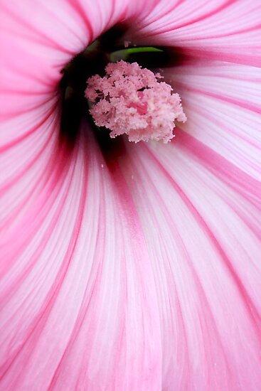 pink by wistine