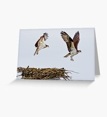 Synchronized Osprey Greeting Card