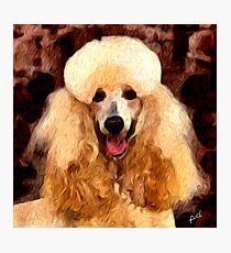 Tulip - Standard Poodle Photographic Print