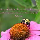 Psalm 14:1 by DreamCatcher/ Kyrah