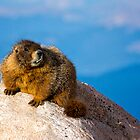 Marmots In Need of Dentistry by Jay Ryser