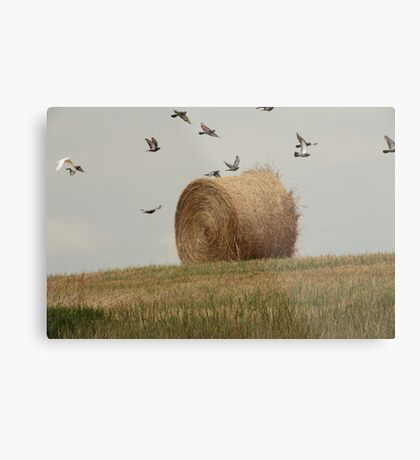 Hairy Hay Bale and Birds Metal Print