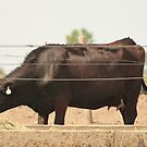 Black Cow and Tires by Thomas Murphy