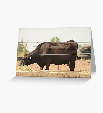Black Cow and Tires Greeting Card