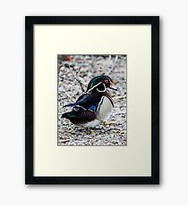 Wind Up Duck Framed Print
