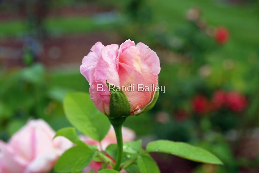 Pink rosebud and more by ♥⊱ B. Randi Bailey