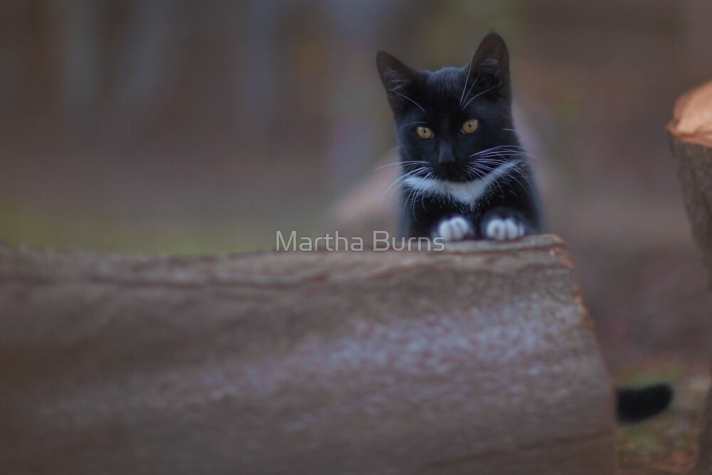 Kitty thoughts by Martha Burns