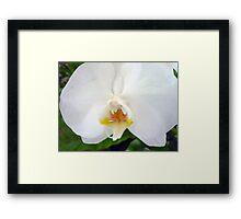 Lovely Single White Orchid Framed Print