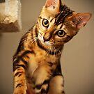 Bengal Cat by JPAube