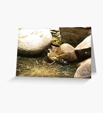 Common Yellow-Throated Warbler Greeting Card