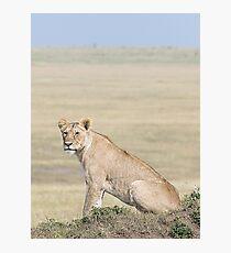 Lion in the Masai Mara Photographic Print