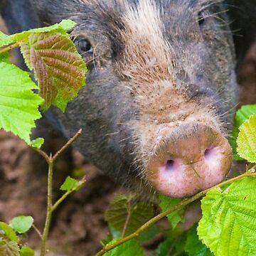 Pig_leaves by TabithaB-W