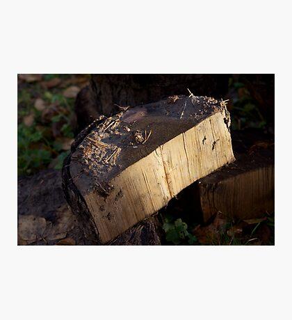 Just wood Photographic Print