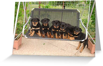 Six Rottweiler Puppies Lined Up On A Swing by taiche