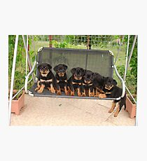 Six Rottweiler Puppies Lined Up On A Swing Photographic Print