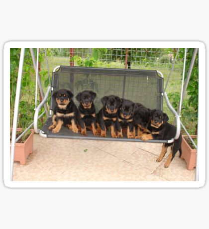 Six Rottweiler Puppies Lined Up On A Swing Sticker