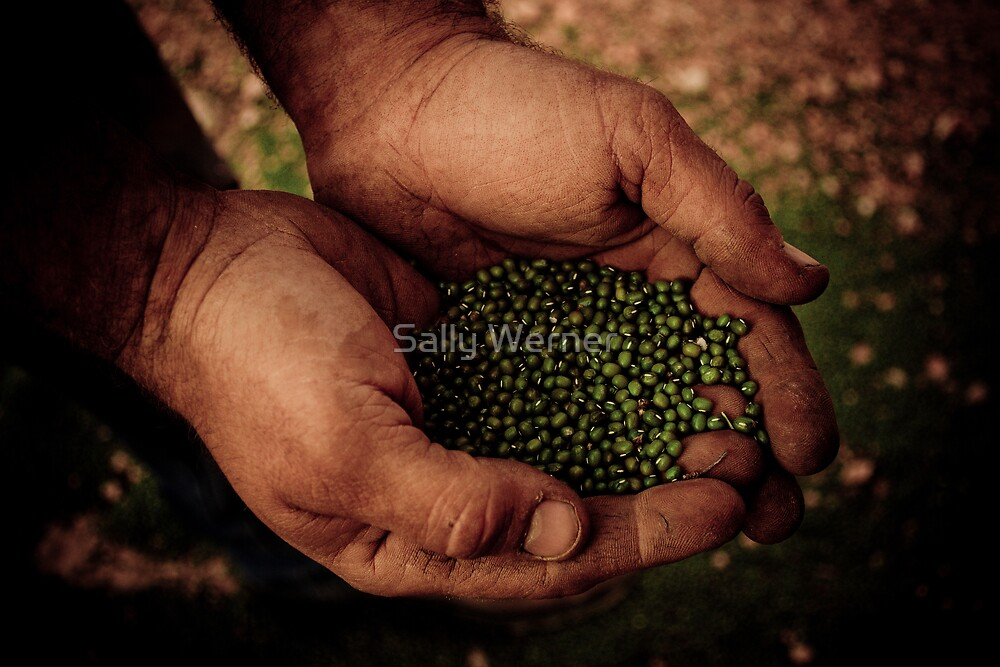Primary Industry: The Hands That Feed Us by Sally Werner